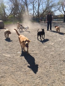 Griffey at dog park